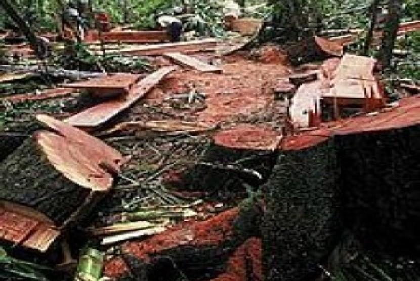 Illegal Logging. Ilustrasi