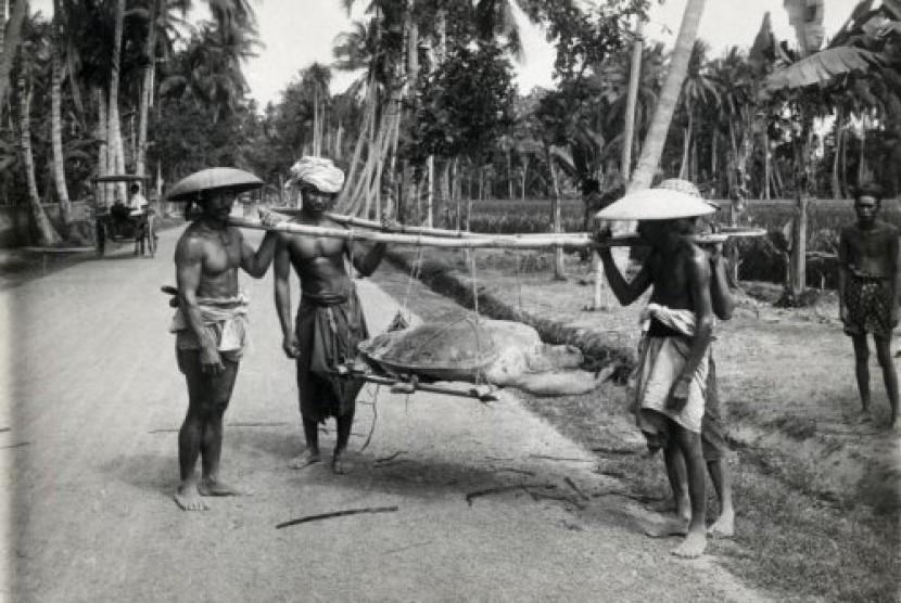 Inlander (pribumi) menganglut penyu di Jawa Barat pada tahun 1900.
