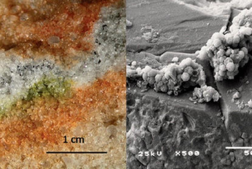 jamur yang disimulasikan bisa hidup di Mars