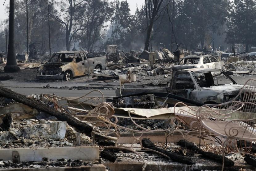 Kebakaran mengakibatkan rumah dan kendaraan habis dilalap di kawasan Santa Rossa, California (10/10).