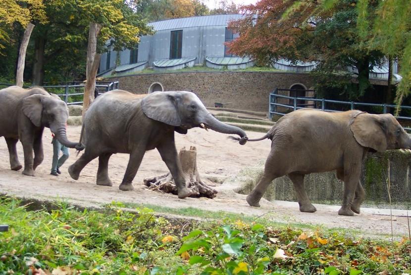 Kebun binatang/ilustrasi