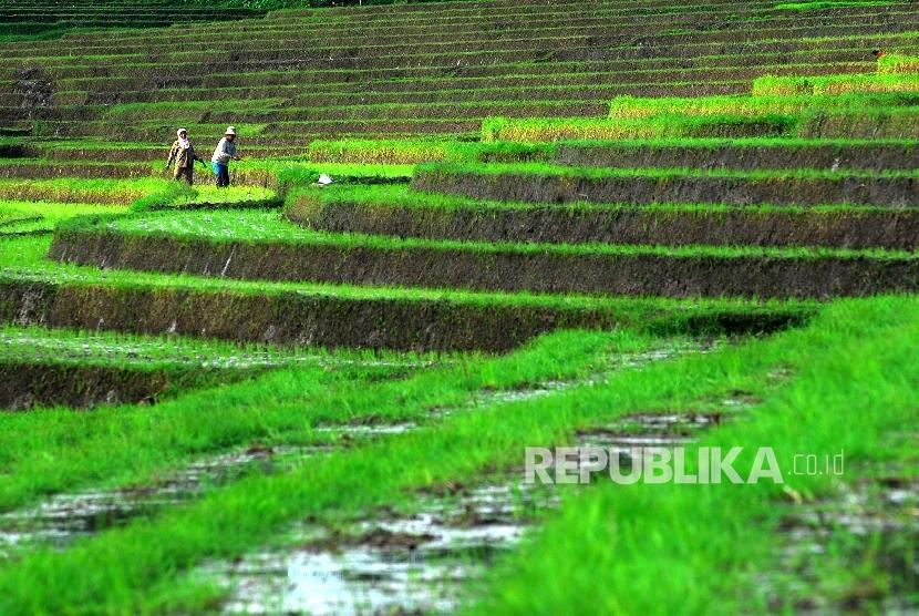 Subak Bali Diharapkan Bisa Lestari