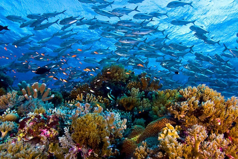 Image result for kekayaan laut