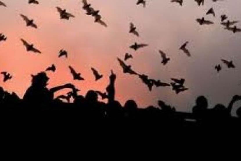 Kelelawar (Ilustrasi)