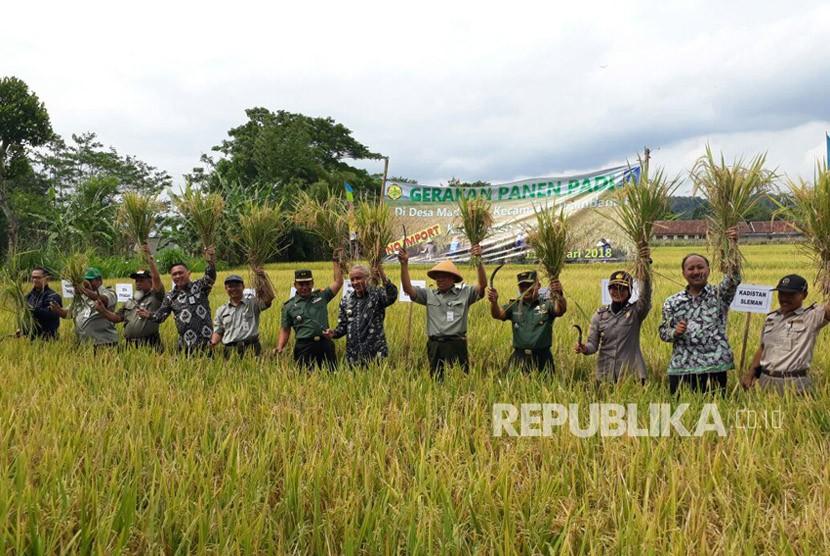 Petani Sleman Awali Tahun dengan Panen Padi