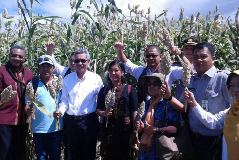 Kepala Badan Litbang Pertanian melaksanakan panen bersama dan launching alat mesin pertanian (alsintan) sorgum di Desa Kawalelo, Kecamatan Demon Pagon, Flores Timur, Provinsi Nusa Tenggara Timur, Jumat (12/5).
