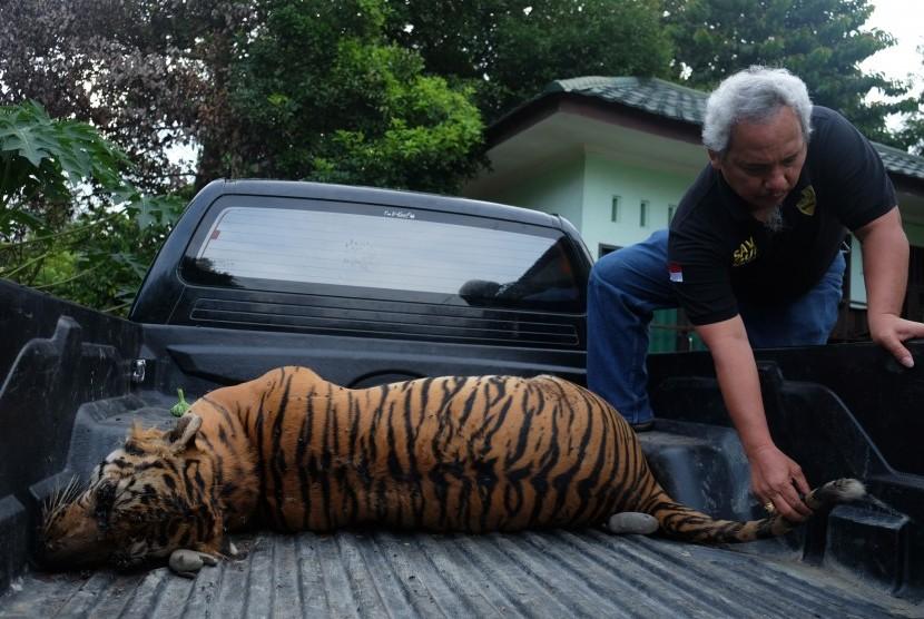 Buruh Sawit Jual Bangkai Harimau Divonis 2 Tahun