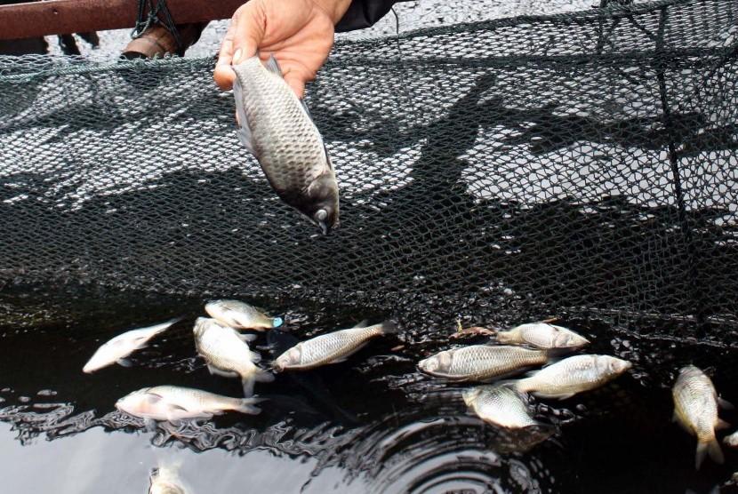 Ribuan Ikan Budi Daya Ditemukan Mati Misterius