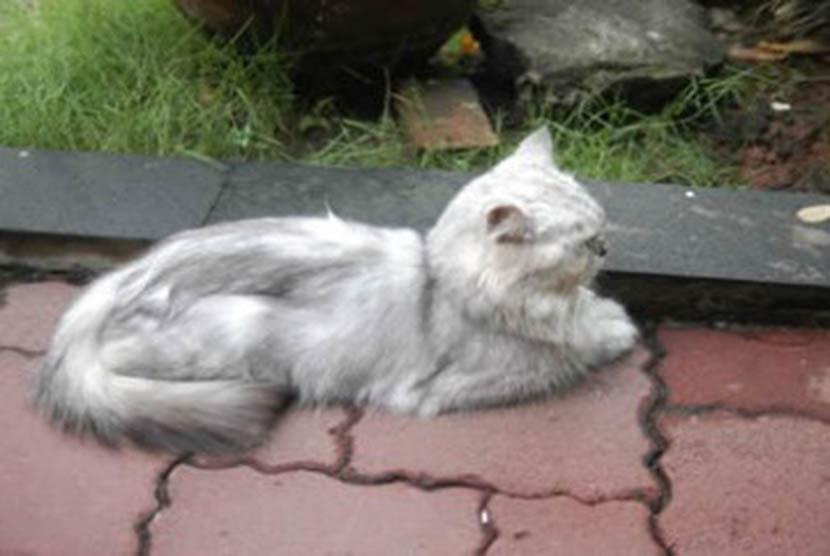 Tas Kucing Mati Dilelang Buat Heboh Republika Online