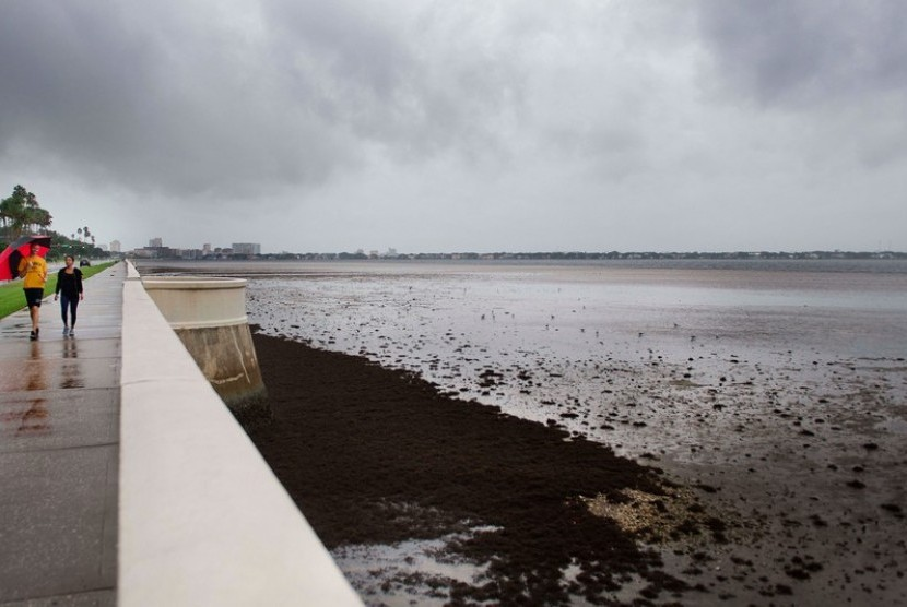 Laut Pesisir Barat Florida Mengering Karena Badai Irma.