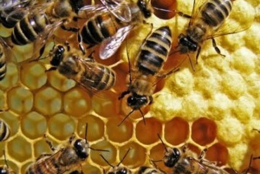 Lebah dan sarangnya (ilustrasi)