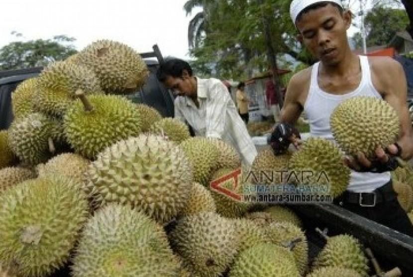 Petani Badui Panen Buah Durian