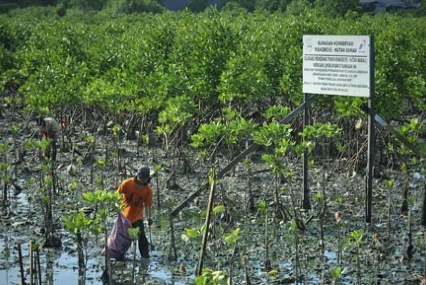 DKP: Kawasan Mangrove di Kendari Kian Menyusut