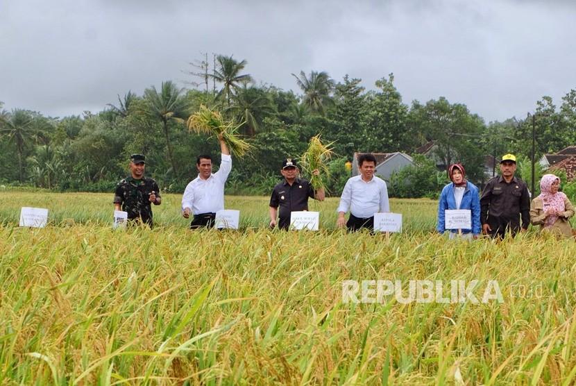 Menteri Pertanian Amran Sulaiman melakukan panen raya dan mengawal harga gabah di petani Desa Pangumbahan Kecamatan Ciracap Kabupaten Sukabumi Selasa (6/2) siang.