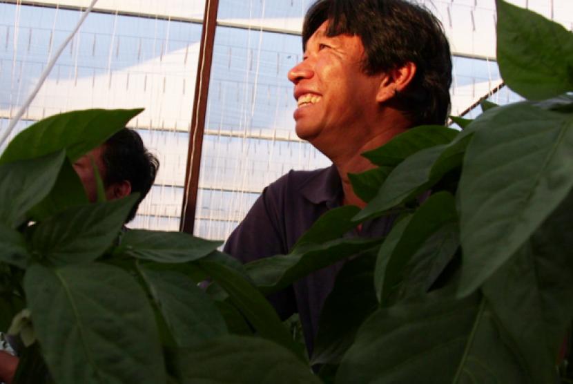 Pengungsi Vietnam Jadi Salah Satu Petani Terbesar di Utara Australia