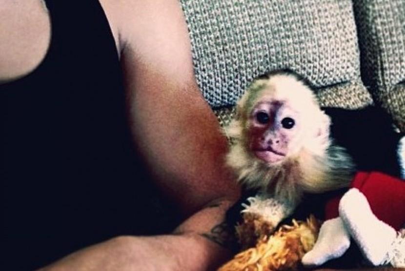Monyet yang pernah dipelihara Justin Bieber