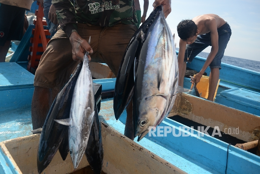 Ikan Cakalang Djual Rp 150 Ribu per Ekor di Ambon