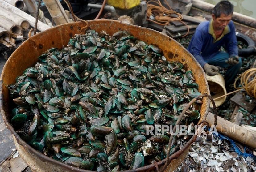Nelayan menyortir kerang hijau di Kampung Nelayan Muara Angke, Jakarta, Rabu (12/4).