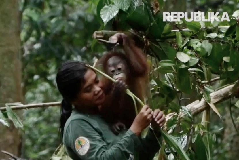 Orangutan dan pengasuhnya di Sekolah Hutan, Samboja, Kalimantan Timur