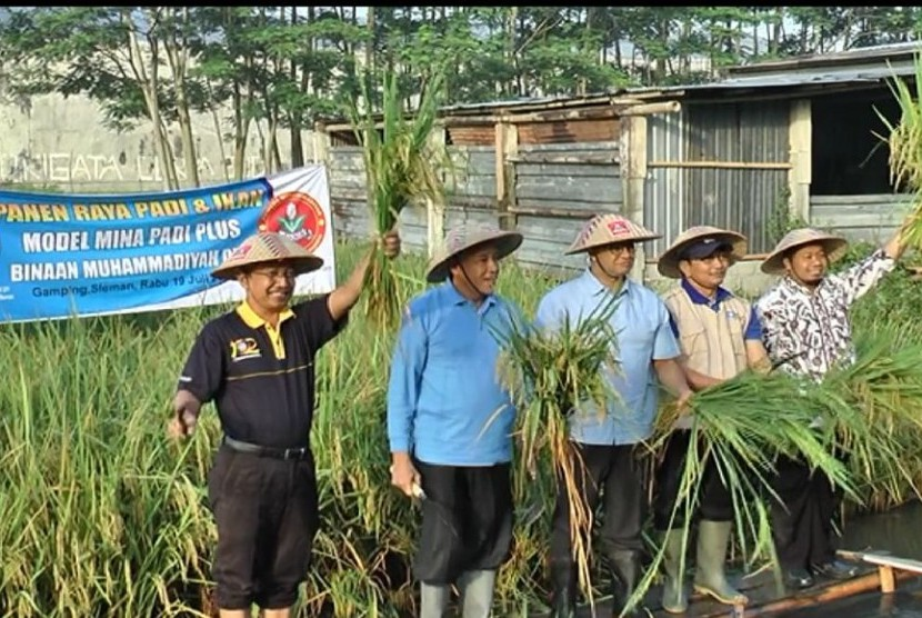 Panen raya padi dan ikan di Kwarasan.