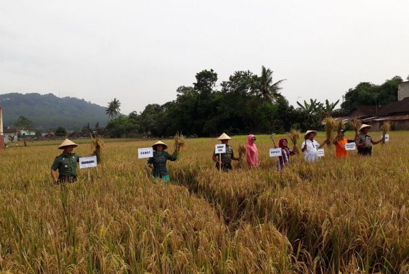 Kementerian Pertanian Kecewa Putusan Impor Beras