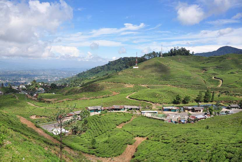 Panorama kebun teh di kasawan Puncak Bogor, Jawa Barat.