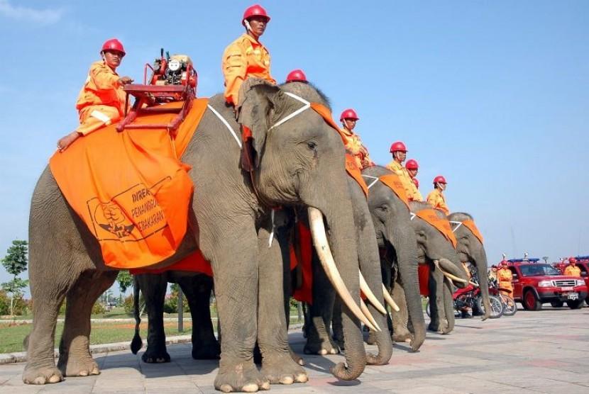 Gajah Sumatra di Tesso Nilo Melahirkan Bayi Jantan