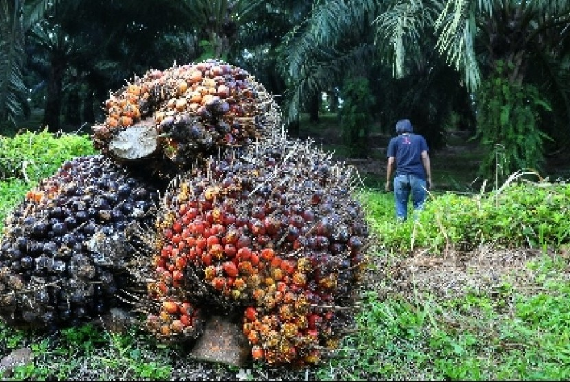 Pekerja di kawasan perkebunan kelapa sawit Cikidang, Sukabumi.