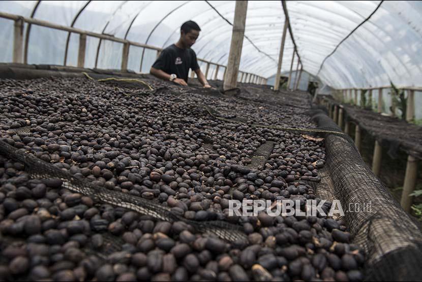 Pekerja mengolah biji kopi natural arabica di Basecamp Persaudaraan Gunung Puntang Indonesia (PGPI) Shelter Kopi Sunda Hejo, Gunung Puntang, Kabupaten Bandung, Jawa Barat (Ilustrasi)