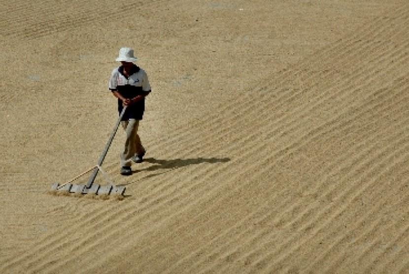 Pekerja menjemur gabah padi hasil panen. (ilustrasi)
