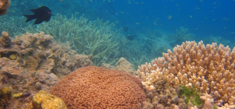 Pemandangan bawah laut sekitar Pulau Kaliage