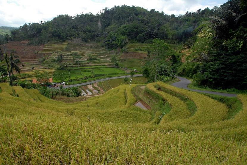 Pemandangan lahan pertanian di Desa Deudel, Tasikmalaya, Jawa Barat.