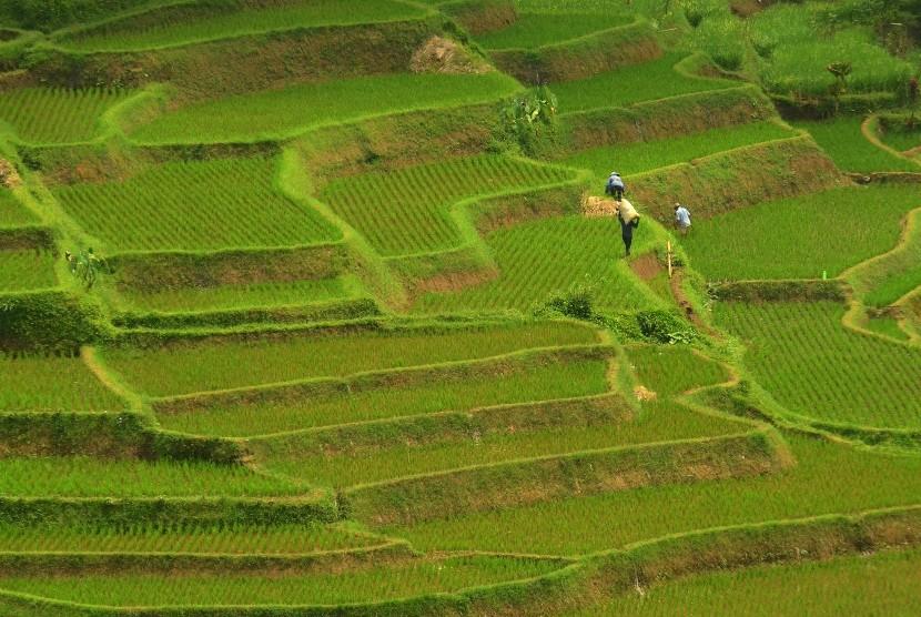 Pemandangan lahan pertanian di Desa Sukamukti, Kabupaten Tasikmalaya, Jawa Barat, Senin (31/10).