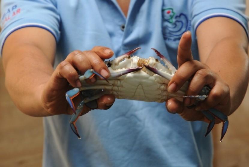 Pembenihan kepiting di Balai Budidaya Air Payau (BBAP) Takalar, Sulawesi Selatan.