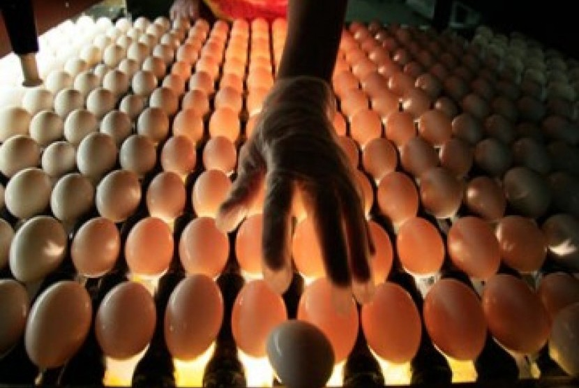 Pemeriksaan telur (ilustrasi)