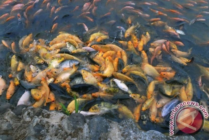 Penakaran ikan tawar