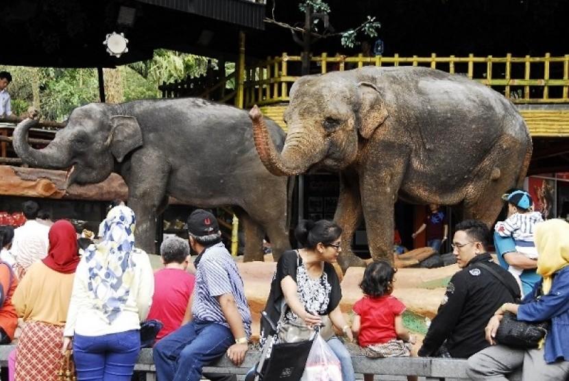 Pengunjung menyaksikan atraksi gajah di arena rekreasi Taman Safari Indonesia (TSI) Cisarua, Bogor, Jabar