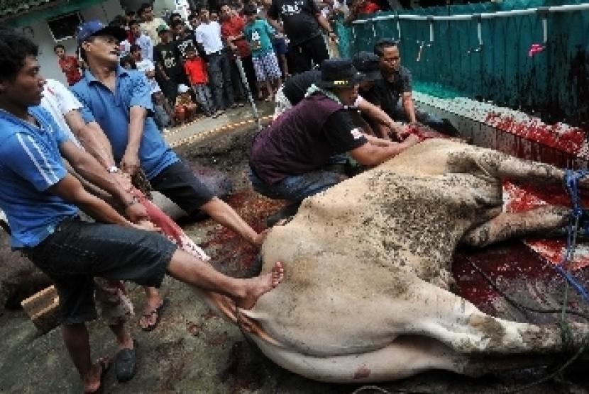 Penyembelihan hewan kurban (ilustrasi).