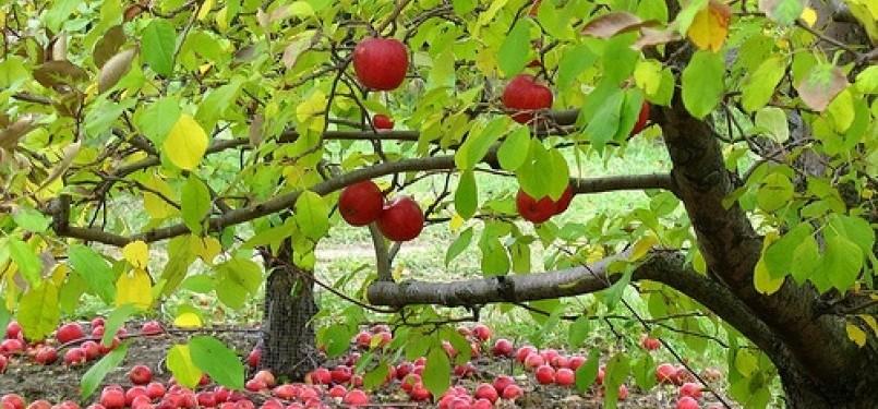 Pepohonan (ilustrasi)