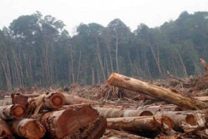 Perambahan hutan