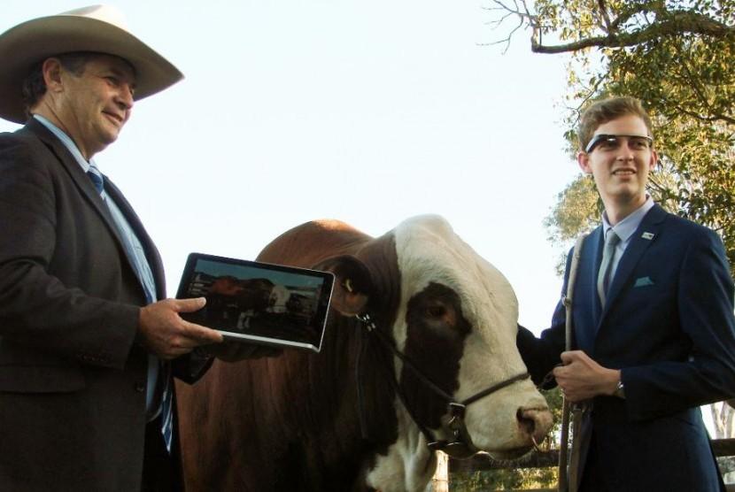 Pertama di Australia, Google Glasses akan digunakan dalam penjurian ternak sapi pejantan dalam event Royal Brisbane Exhibition.