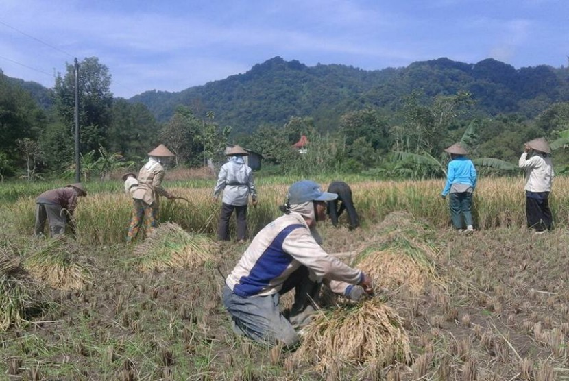 Petani di Desa Gemilang menggunakan pupuk organik.