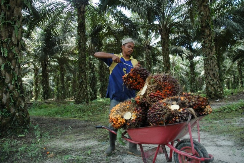 Petani di kebun kelapa sawit.  (Ilustrasi)