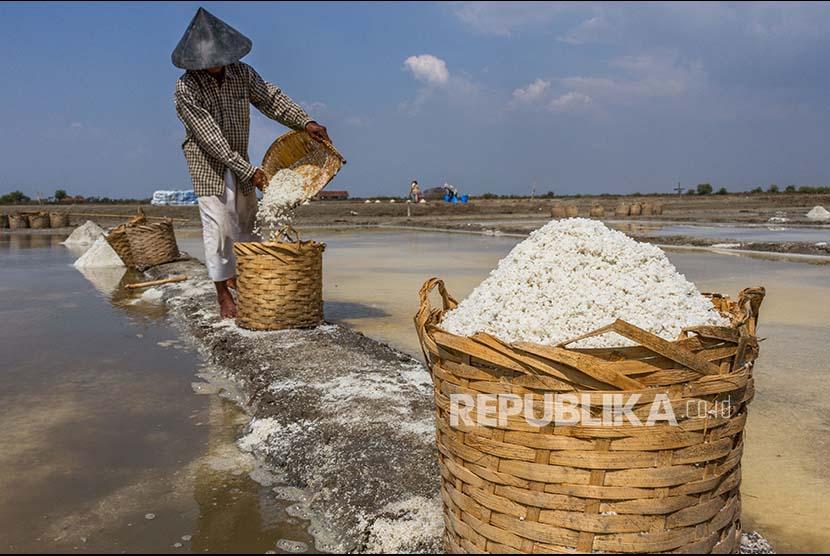 Petani memanen garam di pesisir Wedung, Demak, Jawa Tengah, Kamis (12/10). Memasuki musim penghujan petani garam setempat mengaku kualitas produksi garam menurun akibat tercampur air hujan yang turun sepekan terakhir sehingga menyebabkan harga garam turun dari Rp80.000 per karung (40 kilogram) menjadi Rp70.000 per karung.