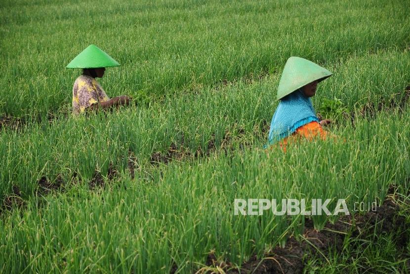 Lembaga Keuangan Mikro Syariah Diharapkan Bantu Petani
