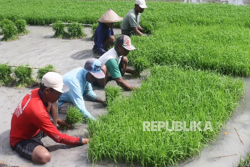 Petani padi (foto atas), Ketua HKTI Moeldoko (foto bawah).