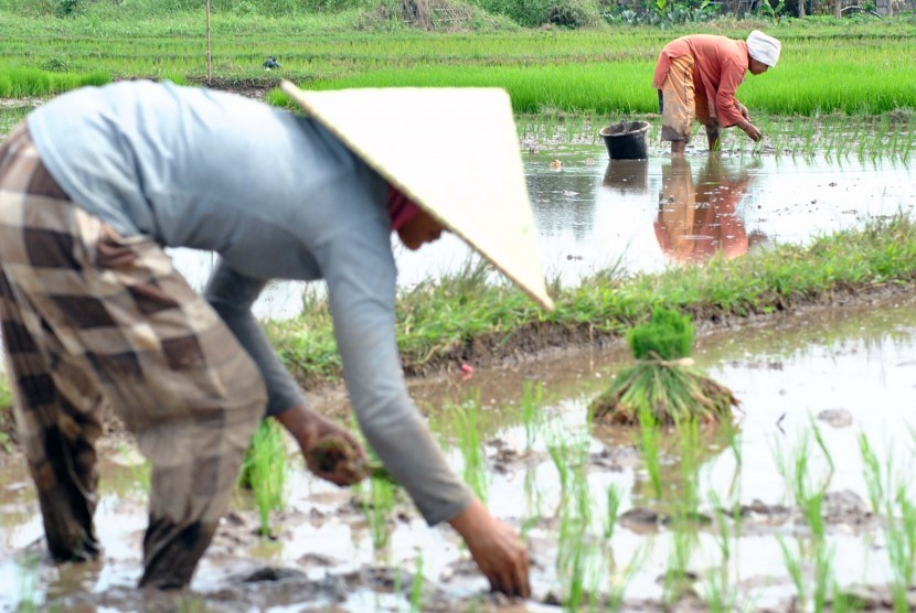 Petani di DIY Diminta Segera Tanam Padi