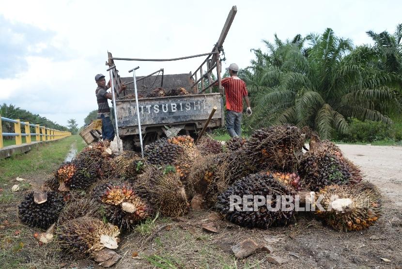 Petani mengangkat kelapa sawit ke dalam pick up untuk dibawa ke pengepul di Kampung Sidodadi, Kab. Siak, Riau, Kamis (10/11).
