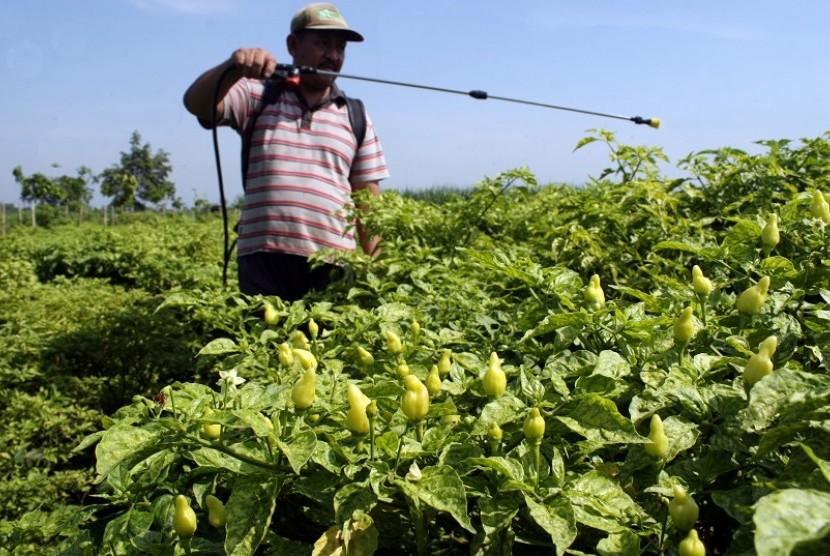 Petani menyemprotkan cairan insektisida pada tanaman cabe di lahan perkebunan cabe rawit di Desa Menang, Kabupaten Kediri, Jawa Timur, Selasa (16/12).