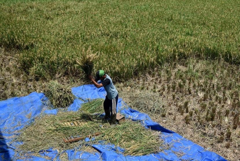 Kementan Lakukan Panen di Timur Indonesia